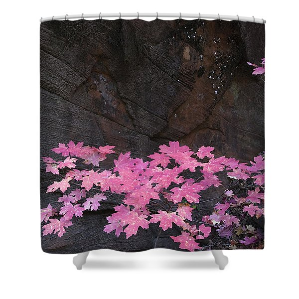 Pink Fall Colors In Sedona Arizona Shower Curtain by Dave Dilli