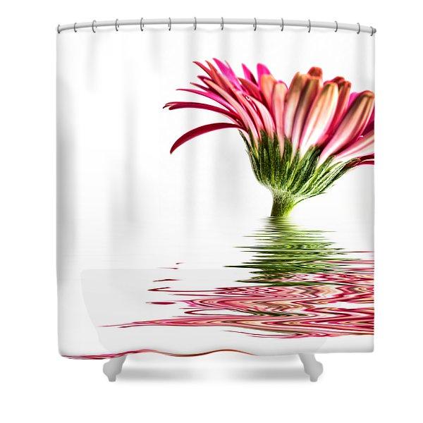 Pink Gerbera Flood 3 Shower Curtain by Steve Purnell