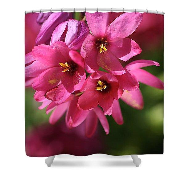Pink Ixia Shower Curtain by Joy Watson