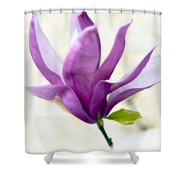 Shower Curtains - Pink Magnolia Shower Curtain by Frank Tschakert