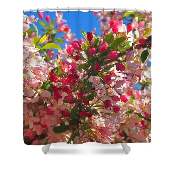 Pink Magnolia Shower Curtain by Joann Vitali
