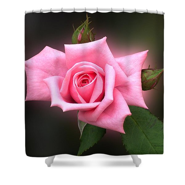 Pink Rose Shower Curtain by Thomas Woolworth