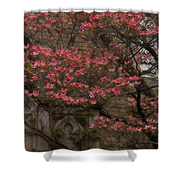 Pink Spring - Dogwood Filigree and Lace Shower Curtain by Georgia Mizuleva