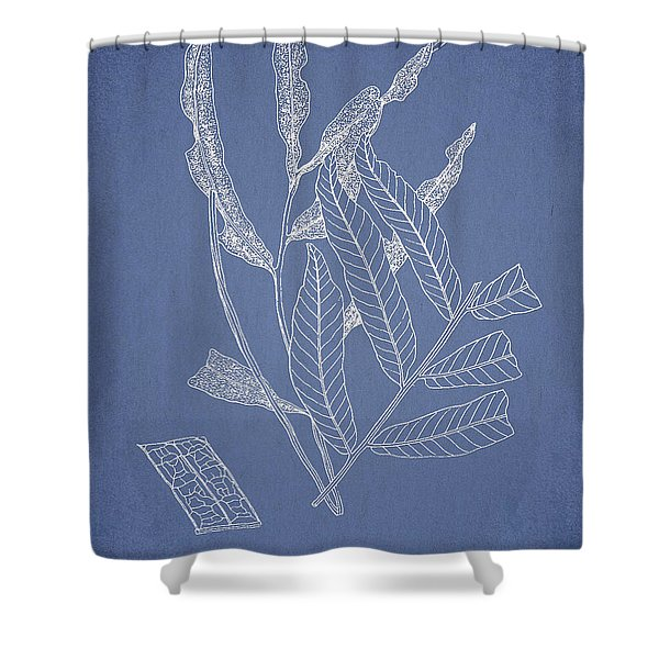 Poecilopteris subrepanda Shower Curtain by Aged Pixel