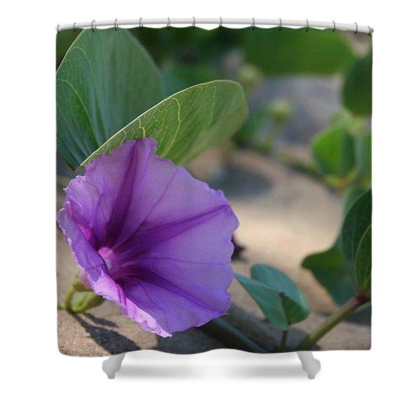 Pohuehue - Pua Nani O Kamaole Hawaii - Beach Morning Glory Shower Curtain by Sharon Mau