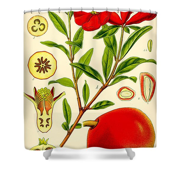 Pomegranate Shower Curtain by Nomad Art And  Design