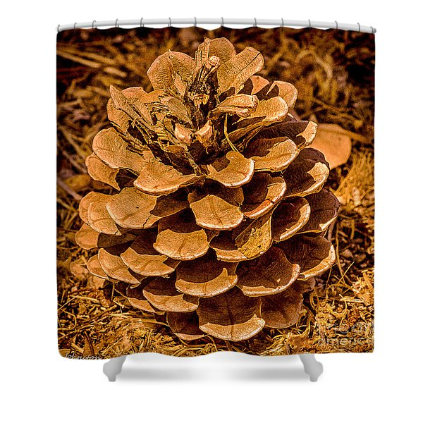 Ponderosa Pine Cone Shower Curtain by  Bob and Nadine Johnston