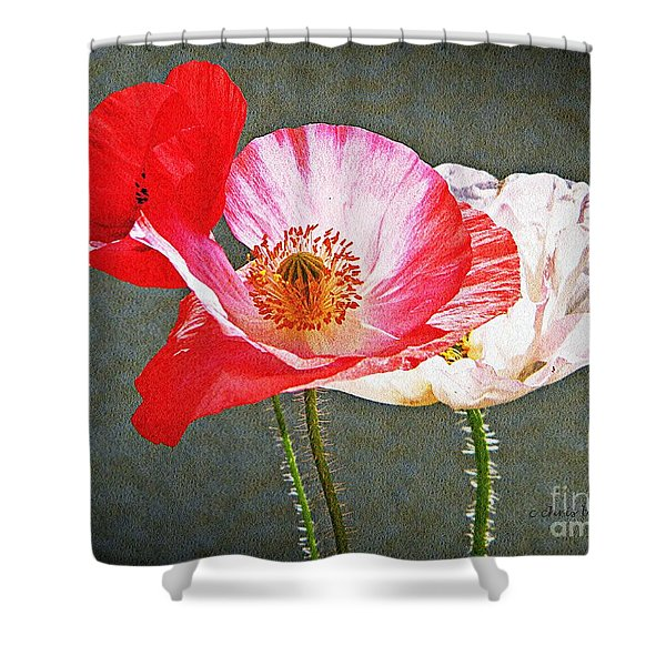 Poppies  Shower Curtain by Chris Berry