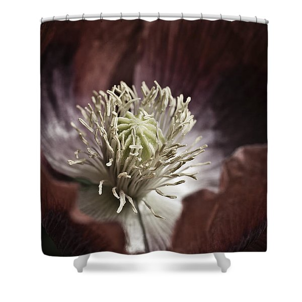 Poppy Shower Curtain by Frank Tschakert
