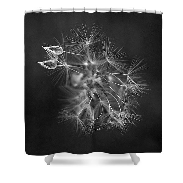 Portrait Of A Dandelion Shower Curtain by Rona Black