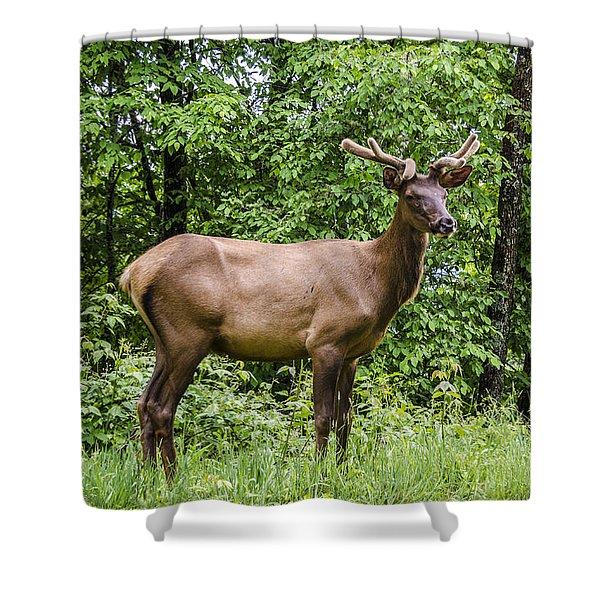 Posing Shower Curtain by Carolyn Marshall