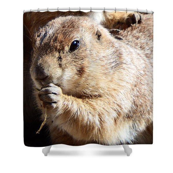 Prairie Dog Shower Curtain by David G Paul