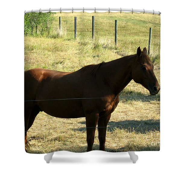Prarie Stallion In The Shade Shower Curtain by Barbara Griffin