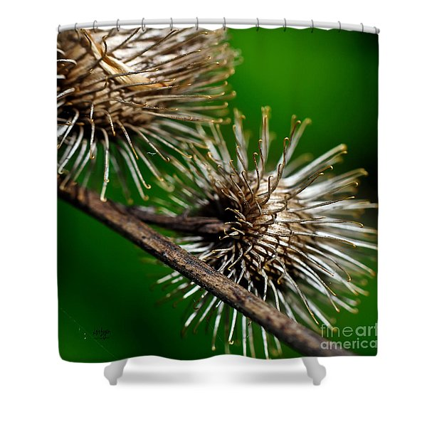 Prickly Shower Curtain by Lois Bryan