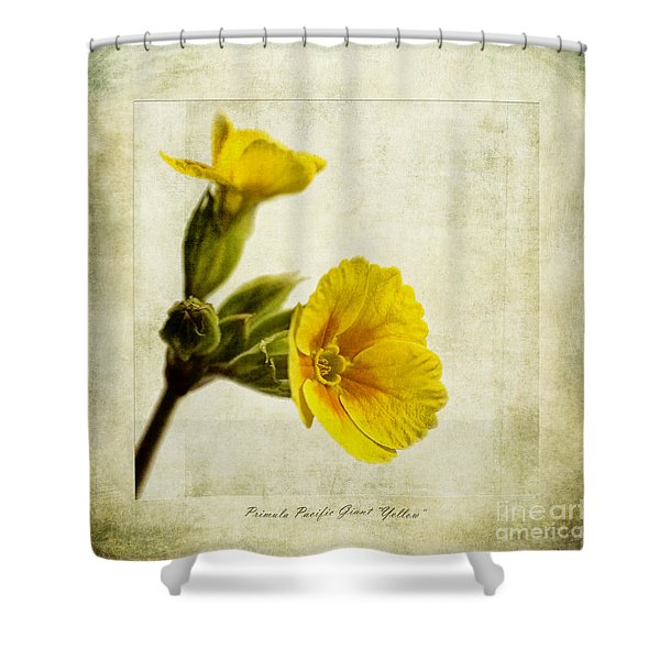 Primula Pacific Giant Yellow Shower Curtain by John Edwards