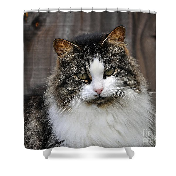 Princess Pose Shower Curtain by Al Powell Photography USA