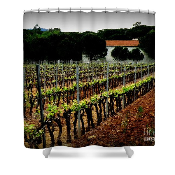 Provence Vineyard Shower Curtain by Lainie Wrightson