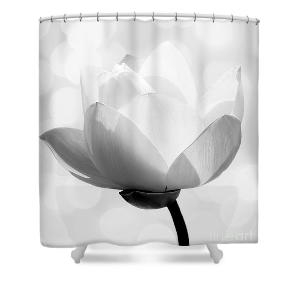 Pure Shower Curtain by Photodream Art