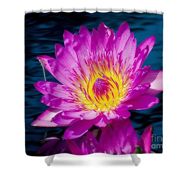 Purple Lily on the water Shower Curtain by Nick Zelinsky