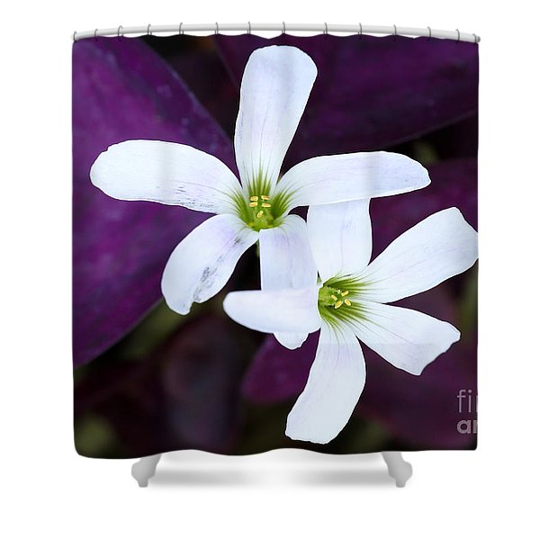 Purple Queen Flowers Shower Curtain by Sabrina L Ryan