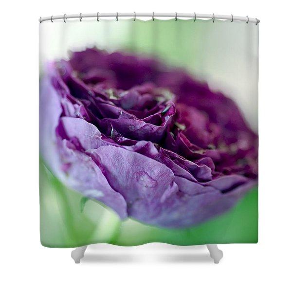Purple Rose Shower Curtain by Frank Tschakert