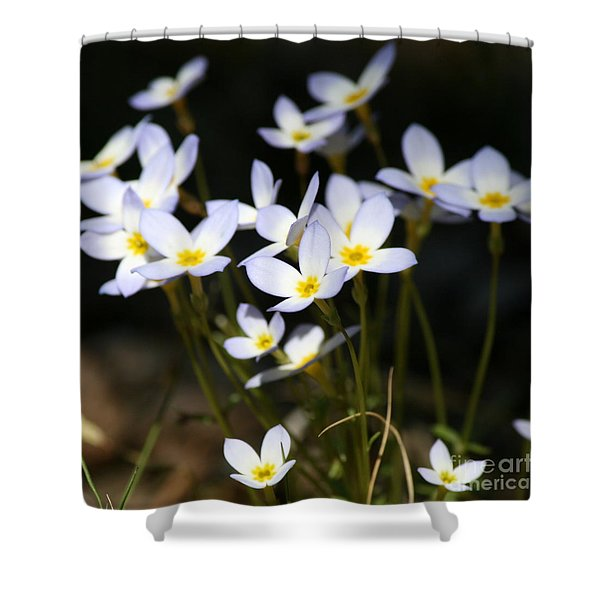 Quaker Ladies Shower Curtain by Neal  Eslinger