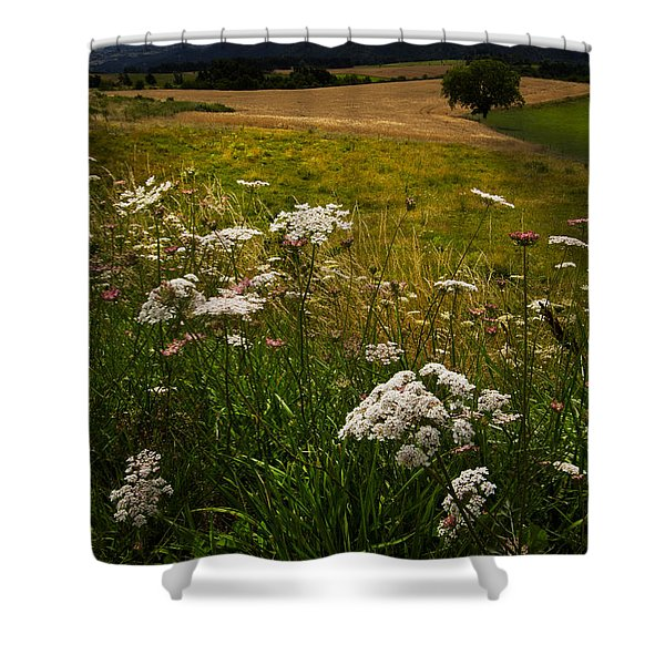 Queen Anne's Lace Shower Curtain by Debra and Dave Vanderlaan