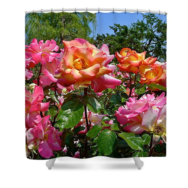 Rainbow Sorbet Roses Shower Curtain by Denise Mazzocco