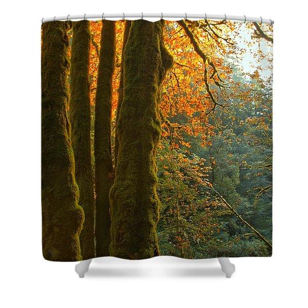 Rainforest Orange Shower Curtain by Adam Jewell
