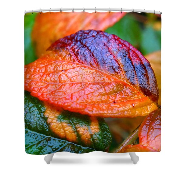 Rainy Day Leaves Shower Curtain by Rona Black
