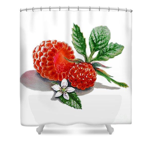Raspberries  Shower Curtain by Irina Sztukowski