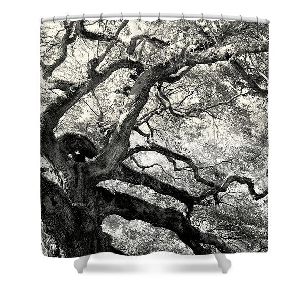 REACHING for HEAVEN Shower Curtain by KAREN WILES