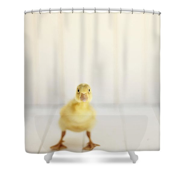 Ready To Rumble Shower Curtain by Amy Tyler