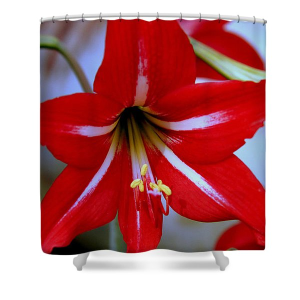 Red And White Lilly Shower Curtain by Debra Forand