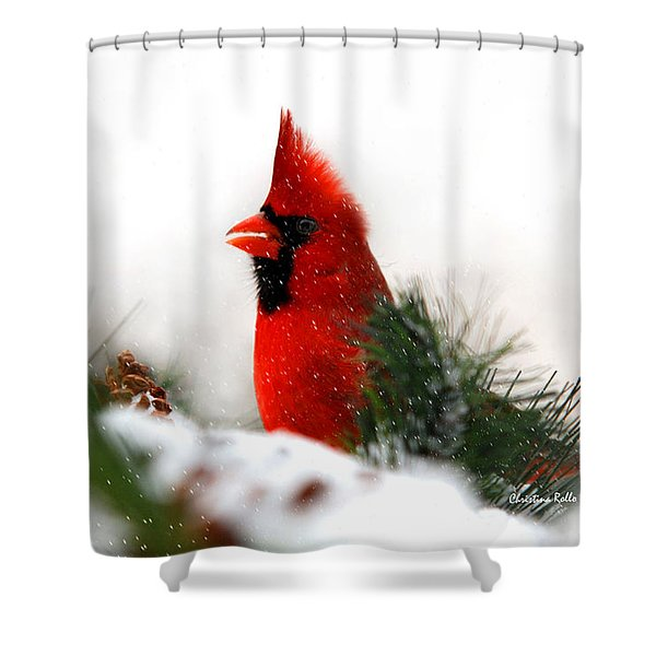 Red Cardinal Shower Curtain by Christina Rollo
