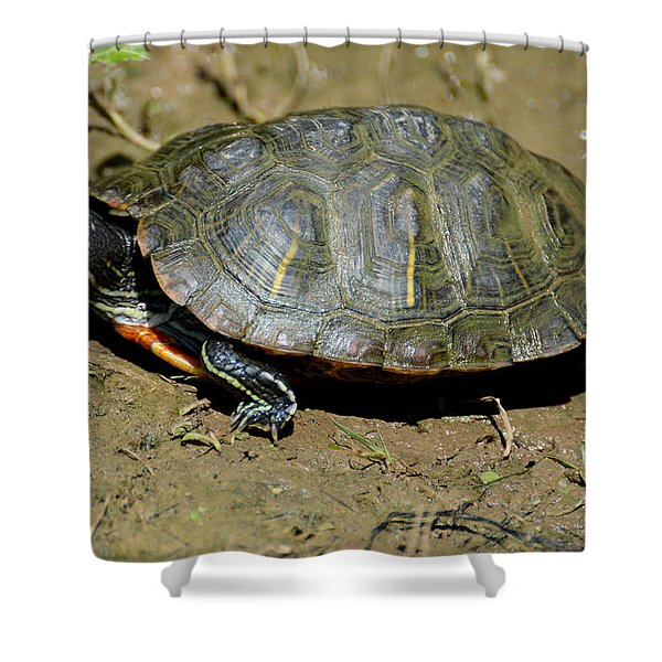 Red Ear Slider Shower Curtain by Todd Hostetter