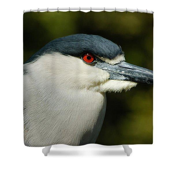 Red Eye - Black-crowned Night Heron Portrait Shower Curtain by Georgia Mizuleva