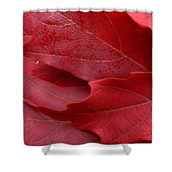Red Maple Leaves Shower Curtain by Jennie Marie Schell