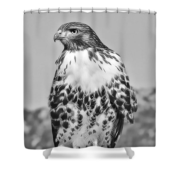 Red Tail Hawk Youth Black And White Shower Curtain by Jennie Marie Schell