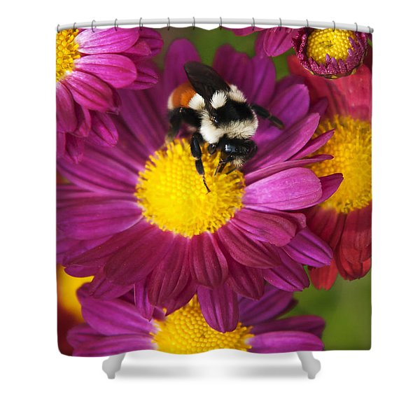 Red-tailed Bumble Bee Shower Curtain by Christina Rollo