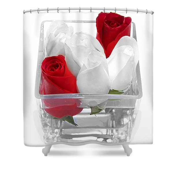 Red Versus White Roses Shower Curtain by Andee Design