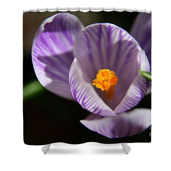 Remembrance Shower Curtain by Neal  Eslinger