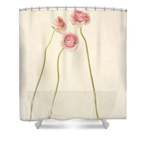 renoncules Shower Curtain by Priska Wettstein