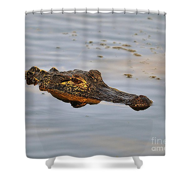 Reptile Reflection Shower Curtain by Al Powell Photography USA