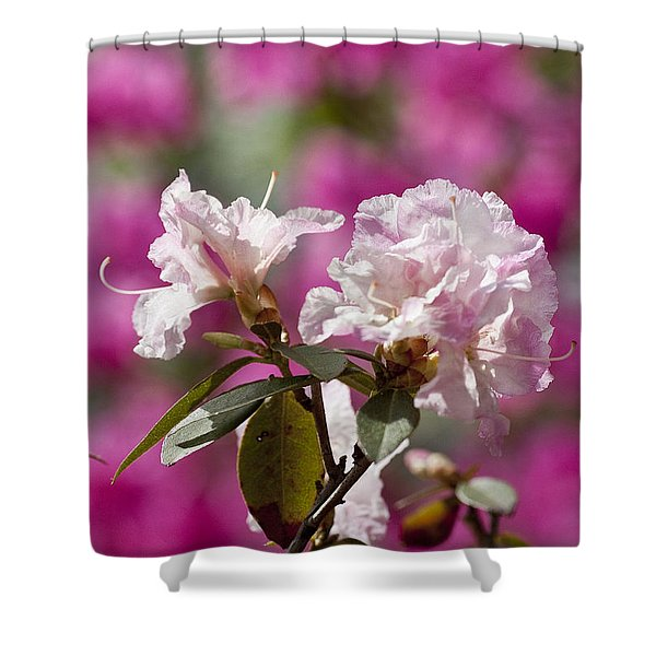 Rhododendron Shower Curtain by Steven Ralser