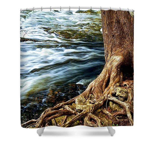 River Through Woods Shower Curtain by Elena Elisseeva