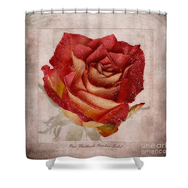 Rosa Floribunda Rainbow Sorbet Shower Curtain by John Edwards