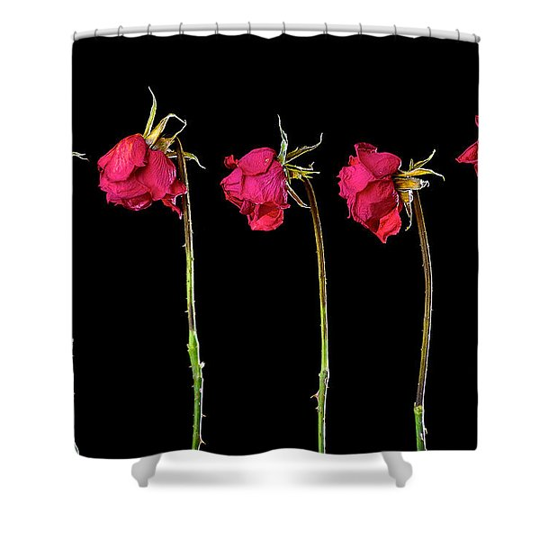 Rose Lineup Shower Curtain by Mauro Celotti