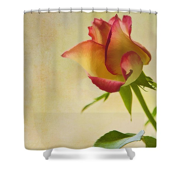 Rose Shower Curtain by Veikko Suikkanen