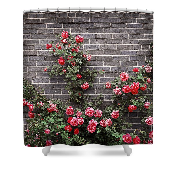 Roses on brick wall Shower Curtain by Elena Elisseeva